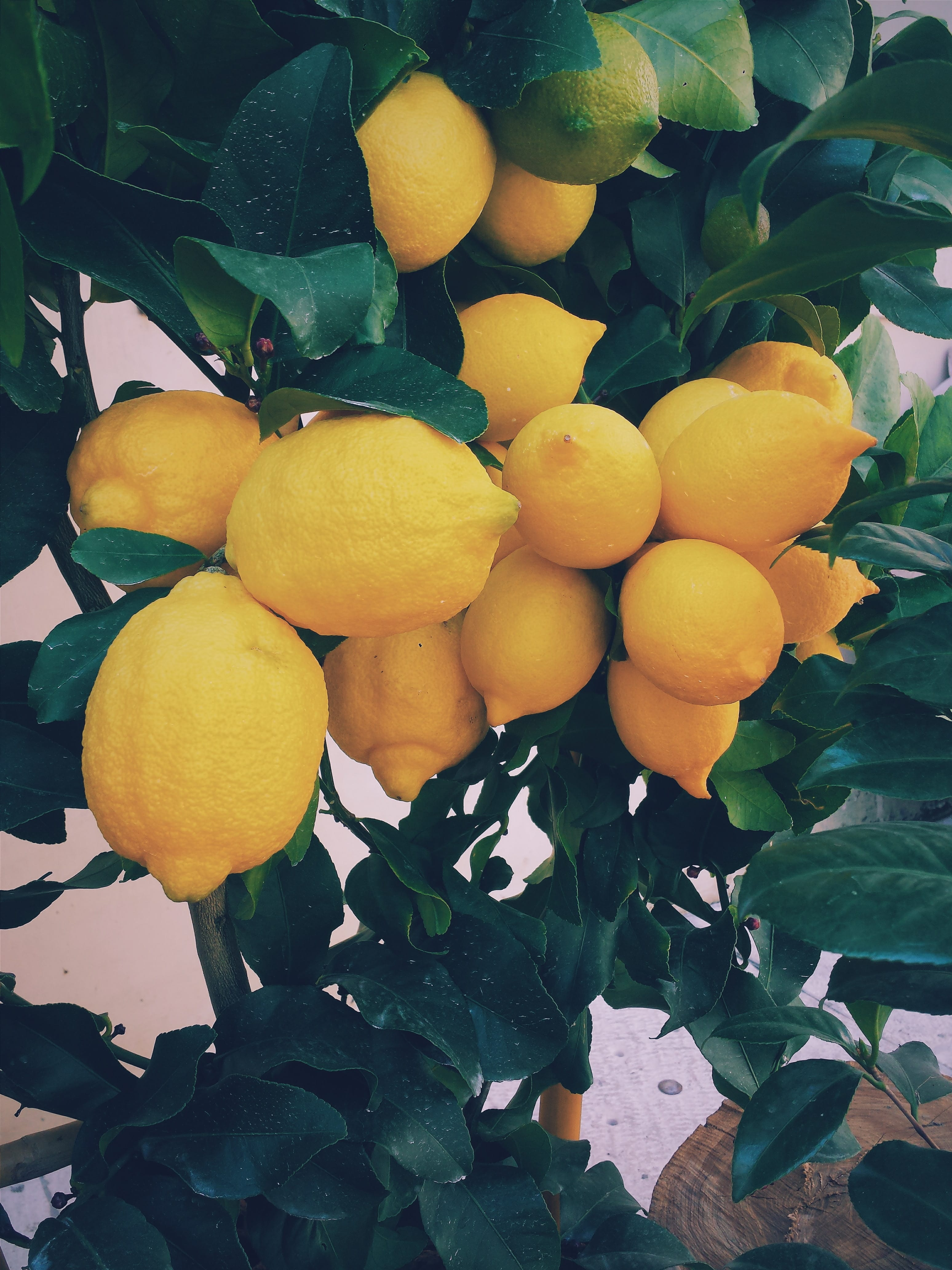 """Stop off at a typical Sicilian kiosk to refuel with a """"seltz limone e sale"""""""